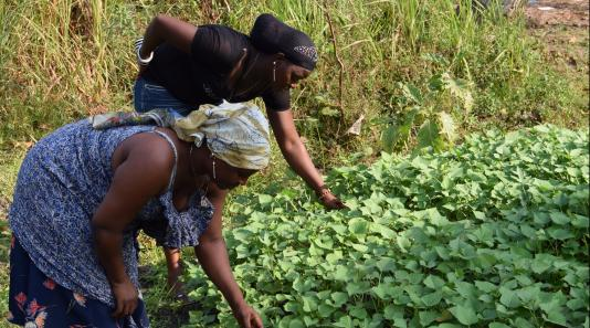 Women in Sierra Leone tending a field