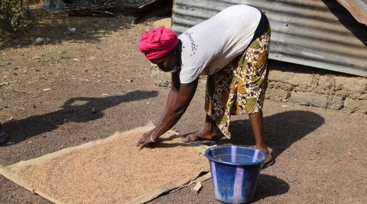Woman spreading grain on a sheet, Sierra Leone